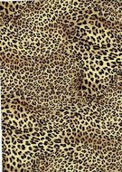 Luipaard flex Leopard